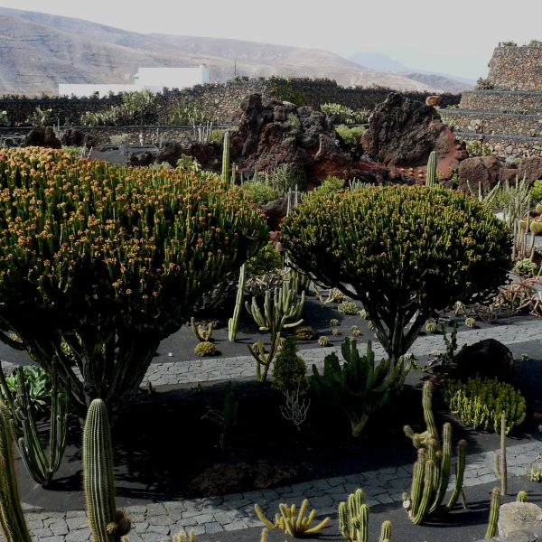 Jardínd de Cactus de Lanzarote - Islas Canarias