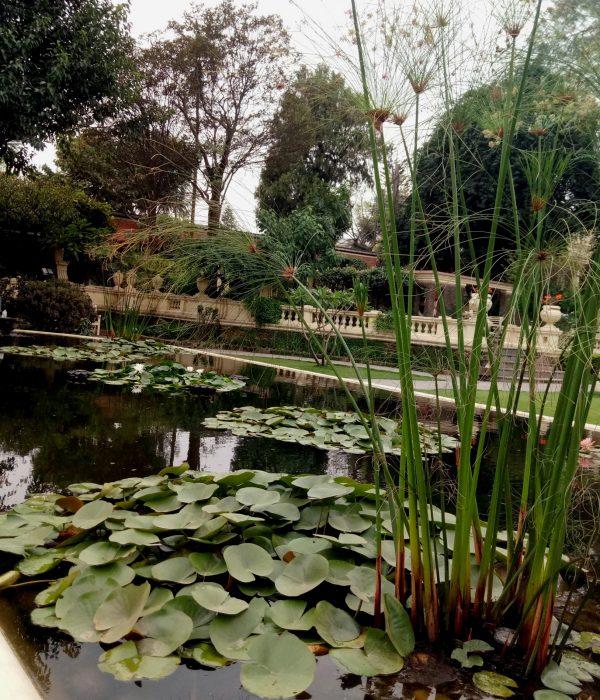 Estanques plagados de nenúfares y papiros inundadn el ambiente de calme y humedad