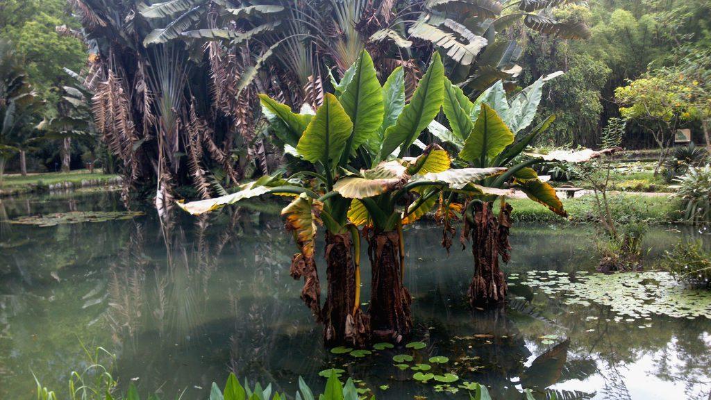 Jardín Botánico de Rïo de Janeiro