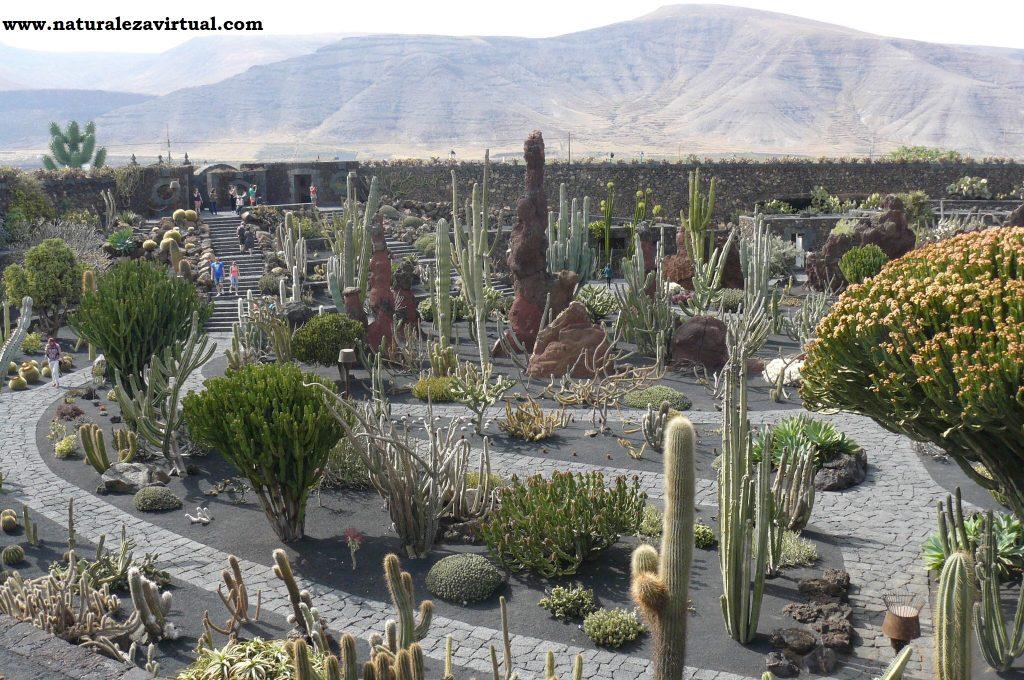 Jardín de Cactus de Lanzarote - NaturalezaVirtual