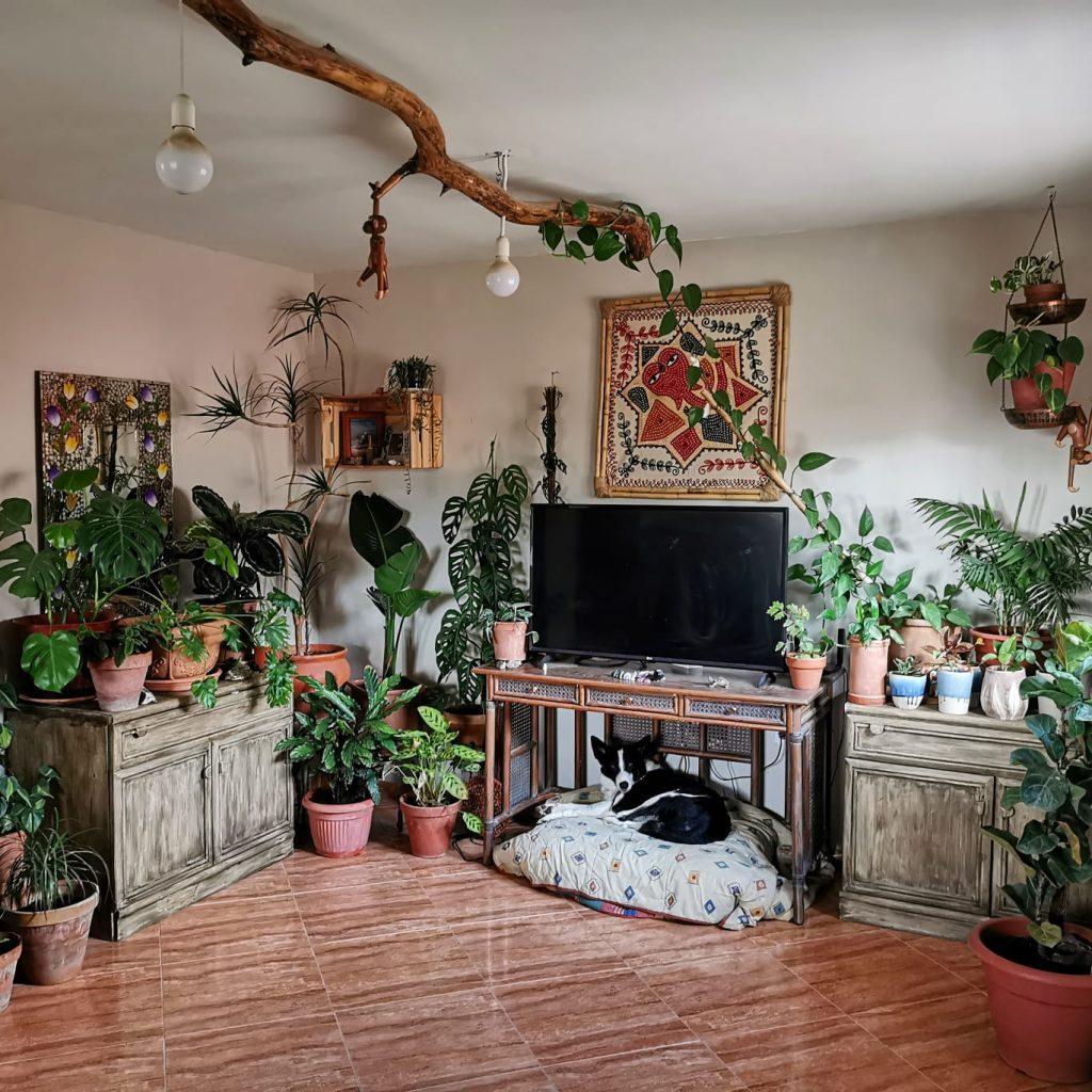 Página inicial de la tienda NaturalezaVirtual