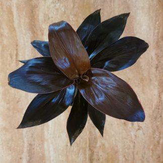 Cordyline Fruticosa Mambo