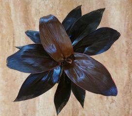 Cordyline Fruticosa Mambo CUADRADA