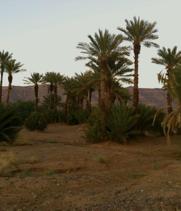 El valle del Draa - Marruecos