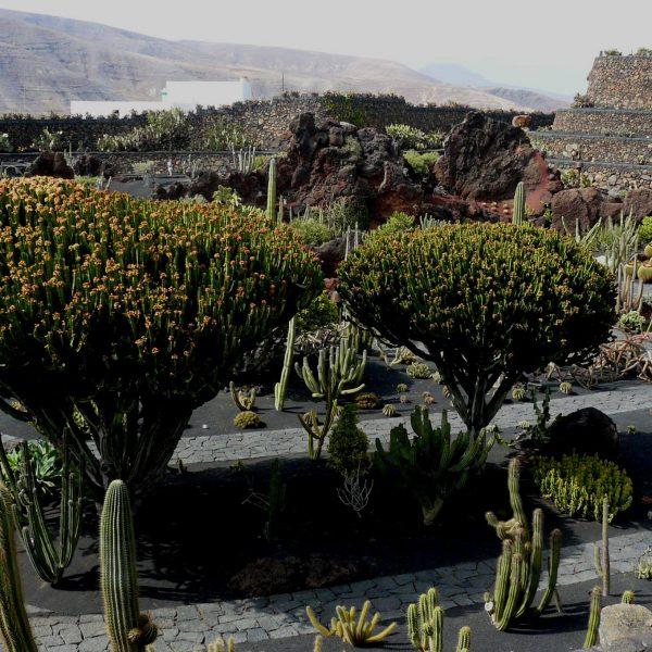 Jardín de cactus de lanzarote - jardines